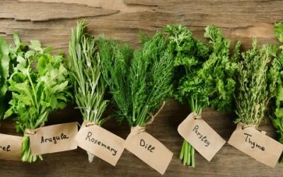 Come coltivare un orto sul balcone wikicasa news for Erbe aromatiche in vaso
